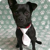 Adopt A Pet :: Mojo - Yucaipa, CA