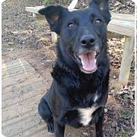 Adopt A Pet :: Marcy - Bardonia, NY