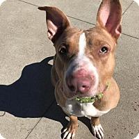 Adopt A Pet :: Toona - Cranston, RI