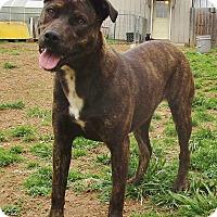 Adopt A Pet :: Hulahan - Melbourne, AR