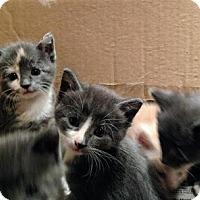 Adopt A Pet :: SASSAFRAS - Pena Blanca, NM