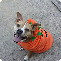 Adopt A Pet :: Josephine - Cherry Hill, NJ