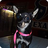 Adopt A Pet :: Medel - Houston, TX