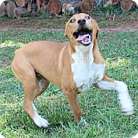 Adopt A Pet :: Oprah - Spring Valley, NY