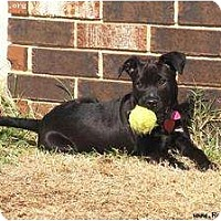 Adopt A Pet :: Raven - Newcastle, OK