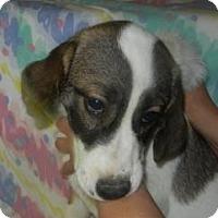 Adopt A Pet :: Al CaBone  ADOPTED!! - Antioch, IL