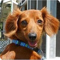 Adopt A Pet :: Missy - Bryan, TX