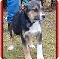 Adopt A Pet :: Myra - Staunton, VA