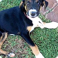 Adopt A Pet :: Jane Bennett - Phoenix, AZ
