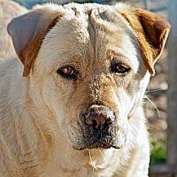 Adopt A Pet :: China - Justin, TX