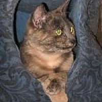 Adopt A Pet :: Tori - Brainardsville, NY