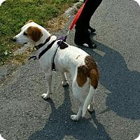 Adopt A Pet :: Chloe - Caledon, ON
