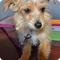 Adopt A Pet :: Tuffy - Meridian, ID