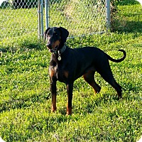 Adopt A Pet :: Helga--pending - New Richmond, OH