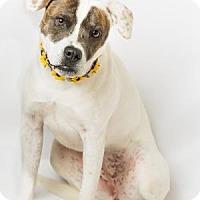 Adopt A Pet :: Luna - Hendersonville, NC