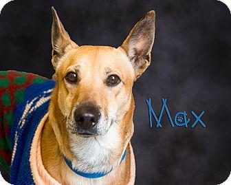 Shepherd (Unknown Type)/Labrador Retriever Mix Dog for adoption in Somerset, Pennsylvania - Max