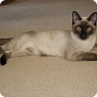 Adopt A Pet :: Pickles - Savannah, GA