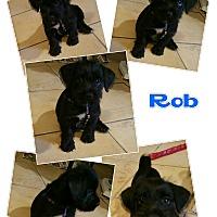 Adopt A Pet :: Rob - LAKEWOOD, CA