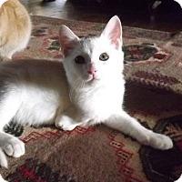 Adopt A Pet :: Miquel - Covington, KY