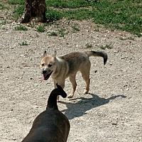 Adopt A Pet :: Jackson - Poland, IN