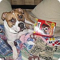 Adopt A Pet :: Buster Brown - Cary, IL