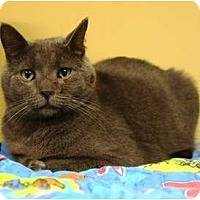 Adopt A Pet :: Castle - Ocean City, NJ