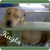 Adopt A Pet :: Kayla - Dallas, PA