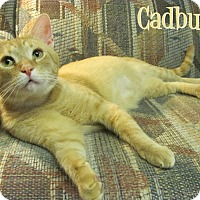 Adopt A Pet :: Cadbury - Covington, KY