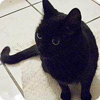 Adopt A Pet :: Charlestina - Adoption Pending - Colmar, PA