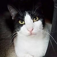 Adopt A Pet :: Elsie - Pacific Grove, CA