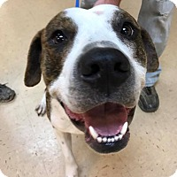 Adopt A Pet :: Hektor! - Eastpointe, MI