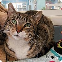 Adopt A Pet :: Frogger - Jackson, NJ