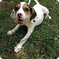 Adopt A Pet :: Fritz - New Boston, NH