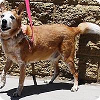 Adopt A Pet :: Mojo - Gilbert, AZ