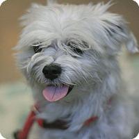 Adopt A Pet :: Bitsi - Canoga Park, CA