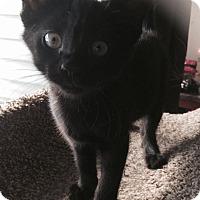 Adopt A Pet :: Takira - Edmonton, AB