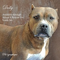 Staffordshire Bull Terrier Mix Dog for adoption in Las Vegas, Nevada - Dolly