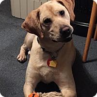 Adopt A Pet :: Conan - Plainfield, CT