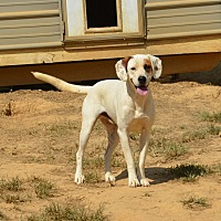 Adopt A Pet :: Landon - Grenada, MS