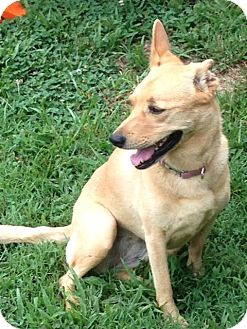 Terrier (Unknown Type, Medium) Mix Dog for adoption in Columbia, Tennessee - Lainey/CP