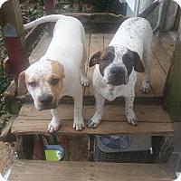 Adopt A Pet :: Trackr - Pensacola, FL