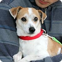 Adopt A Pet :: Felix - Harrison, NY