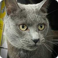 Adopt A Pet :: Chance - Wilmington, OH