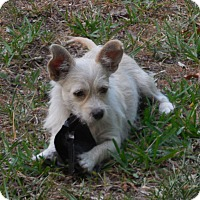 Adopt A Pet :: Pixie - Ormond Beach, FL