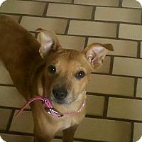 Adopt A Pet :: Juliet - Hancock, MI