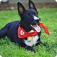 Adopt A Pet :: Chester-Trained - Monrovia, CA