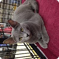 Adopt A Pet :: Mia - Simpsonville, SC