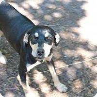 Adopt A Pet :: Millie - Wauchula, FL