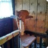 Adopt A Pet :: Phoenix - Delmont, PA