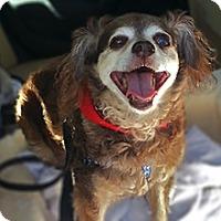 Adopt A Pet :: Ginger - San Juan Capistrano, CA